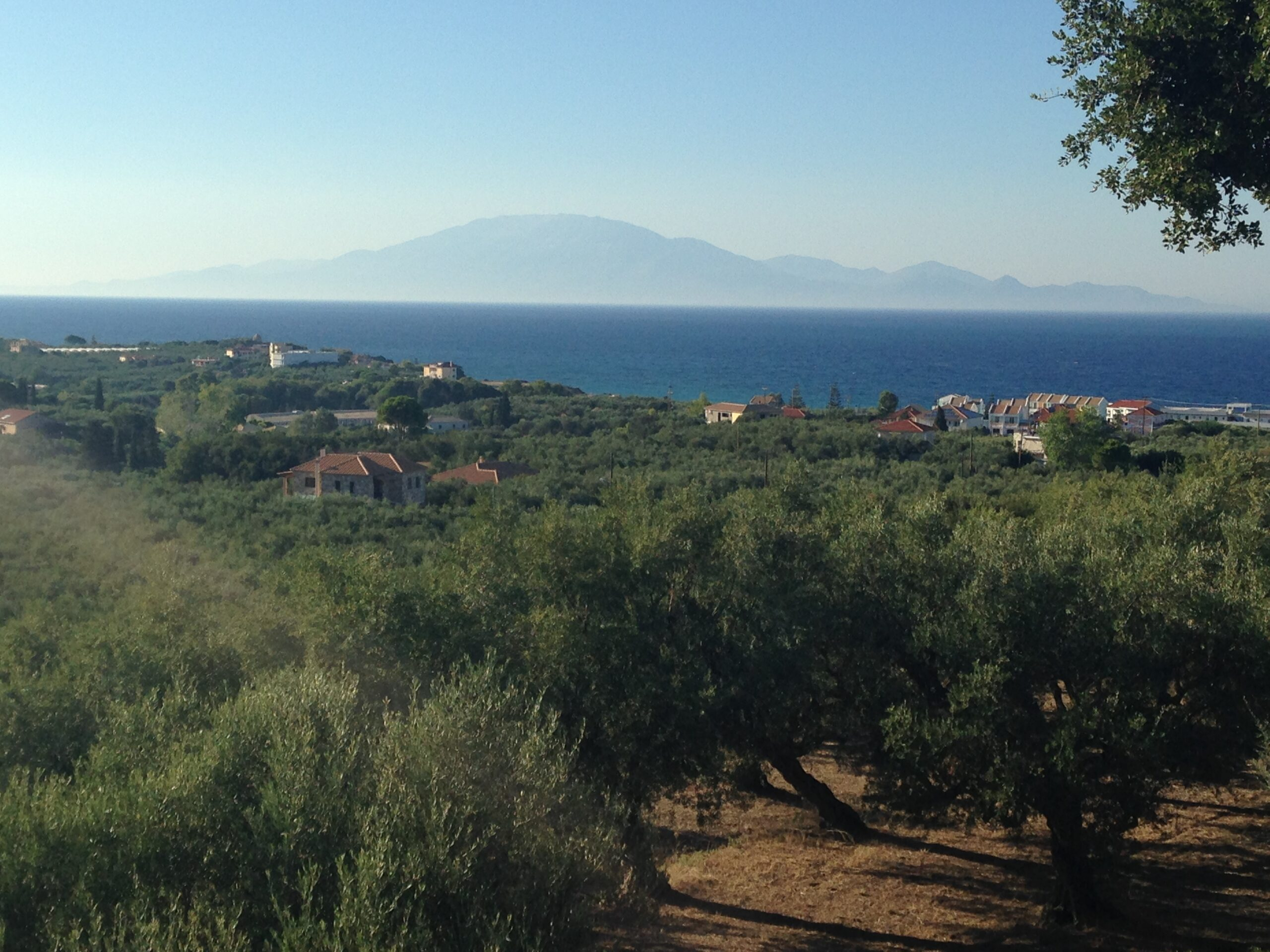 views across olive trees and the sea