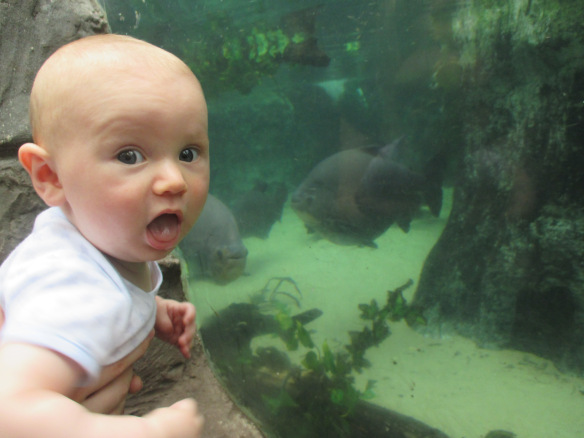 tiny Jake next to a fish display