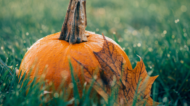 pumpkin sat on grass to symbolise an eco-friendly Halloween