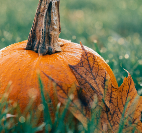 pumpkin sat on grass to symbolise an eco-friendly Halloween
