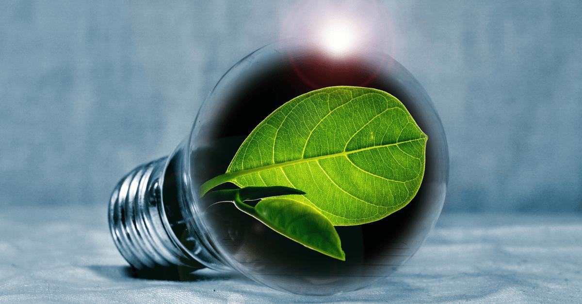 a bulb with a leaf inside