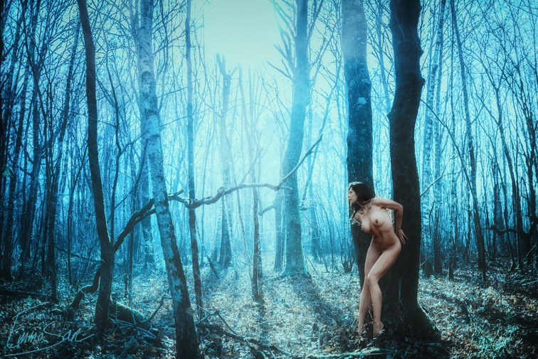 woods  small.jpg