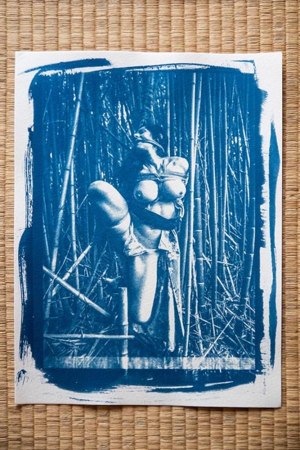 cyanotype shibari bambous