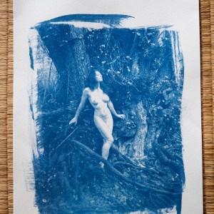 Cyanotype Au pied de son arbre