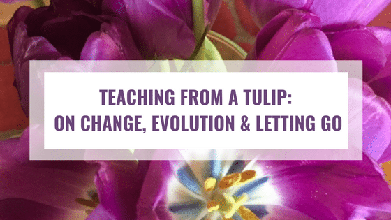Teaching From A Tulip: On Change, Evolution & Letting Go