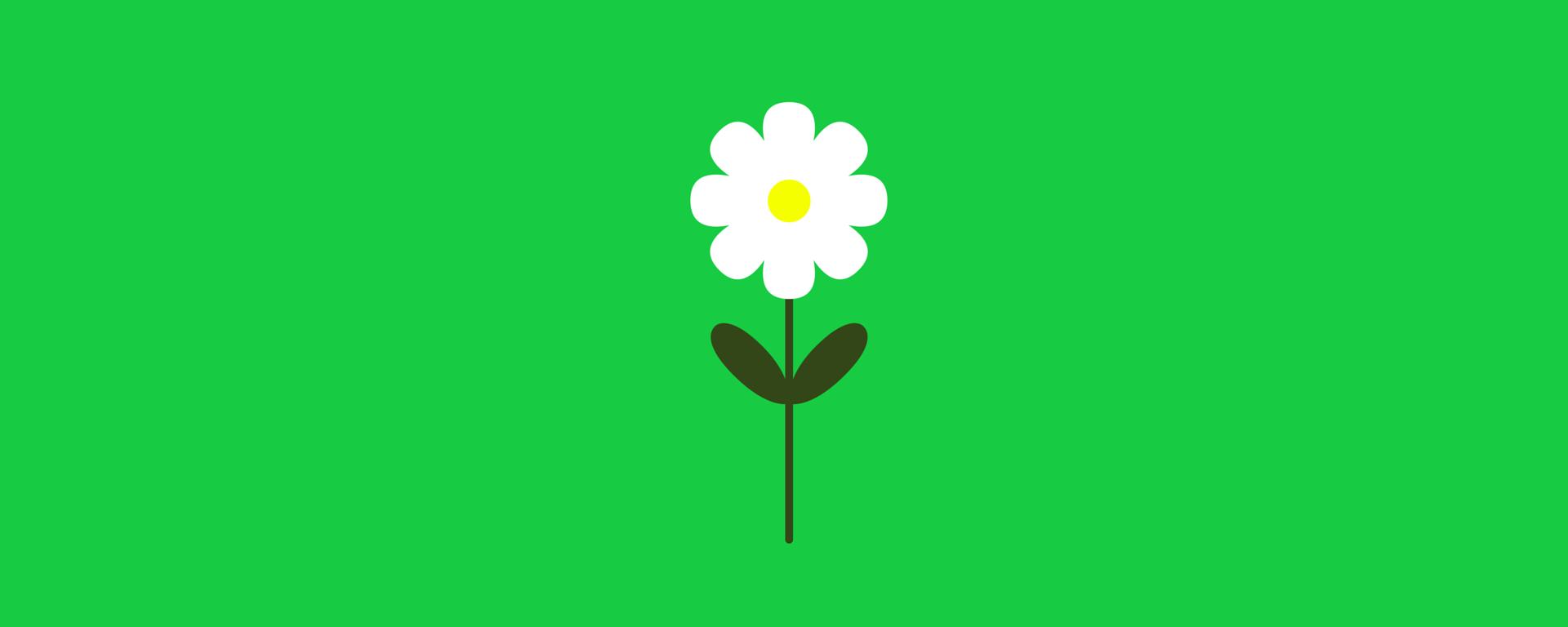 Margherita su sfondo verde