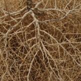 Desert Tumbleweed - WIY