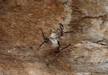 Terrifying wasps