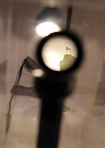 Anatolij Konenko Microscopic Deer