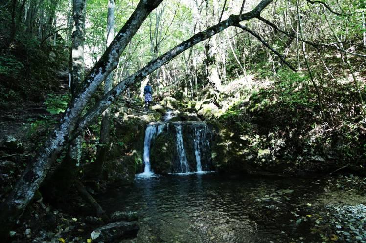 Bigar Forest
