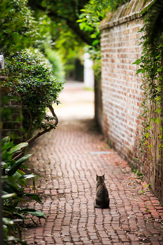 animal stillness cat in an alley