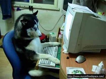 cachorro-computador-digitando