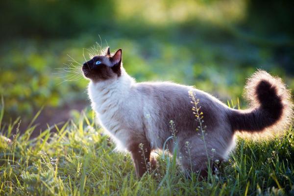 foto-gato
