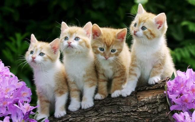 gatinhas+filhotes