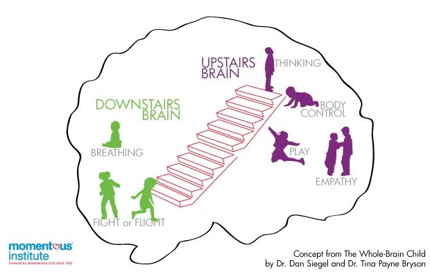 Upstairs & downstairs brain