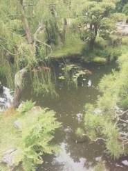 Koi Pond at the Japanese Tea Garden in SF