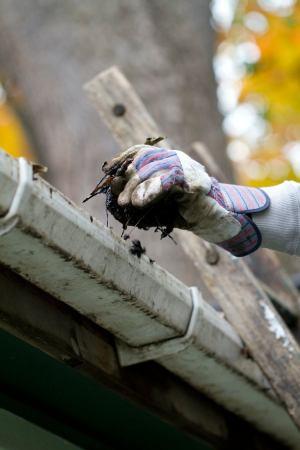 Reinigen Sie die Dachrinnen, um Grillen loszuwerden