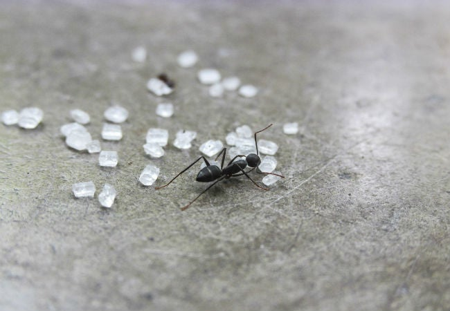 ants in the kitchen 7 ways to kill