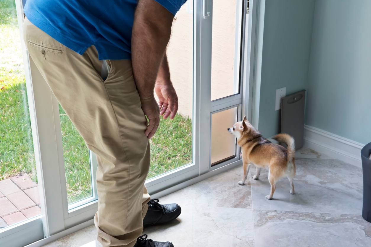 installing a pet door 5 things to know