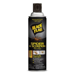 The Best Scorpion Killer to Rid Your Home or Yard of the ...