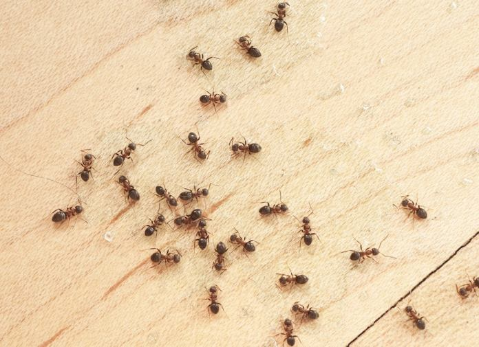 10 Bugs That Are Living in Your House—and How to Get Them Out!  - Bob Vila