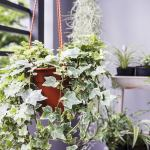 The 8 Best Plants For Your Bedroom And Why Bob Vila