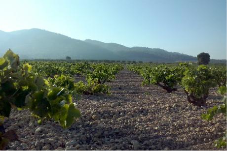Plan LEADER cuenta con 675.000 euros para proyectos productivos en entorno rural