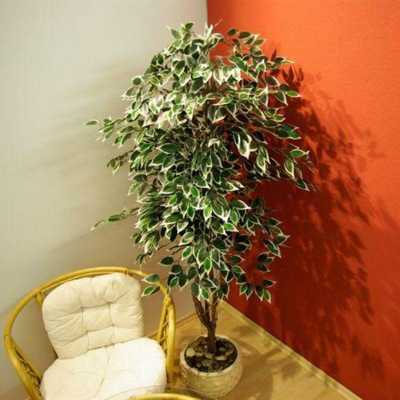 Piante finte artificiali da arredo interno Ficus Benjamin