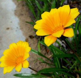 2016-04-12-flowers-along-the-walk