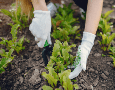care giving is like gardening