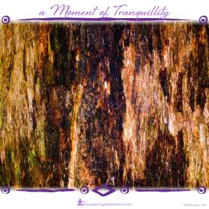 a Moment of Tranquillity - Tree bark