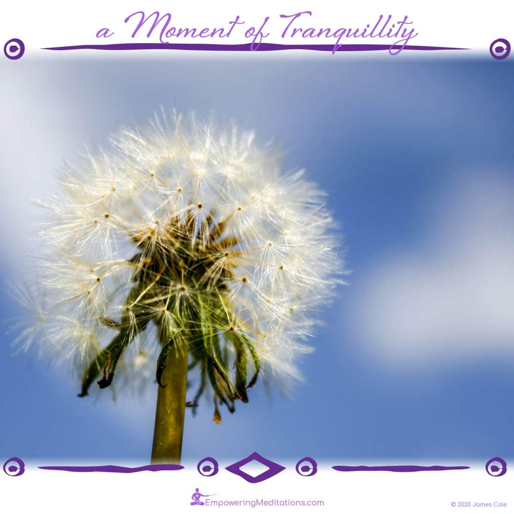 a Moment of Tranquillity - Seeds of the Dandelion