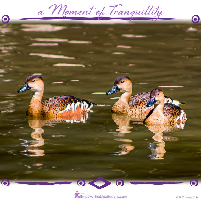 a Moment of Tranquillity - Family of Ducks