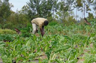 Samson farming