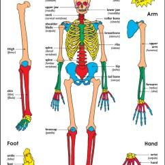 Beaver Skeleton Diagram 1978 John Deere 316 Wiring August | 2014 Know-it-all