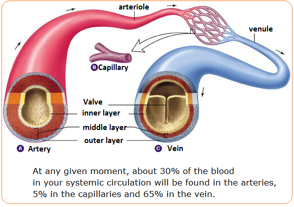 using a venn diagram to compare and contrast cat5e wall plate wiring human body arteries veins | know-it-all