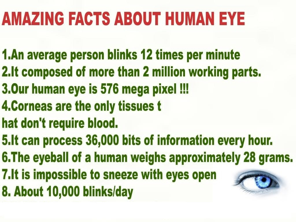 Eye Anatomy Knowitall