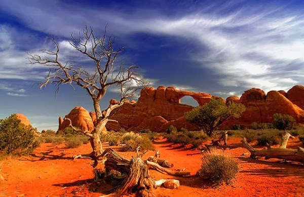 largest deserts in world