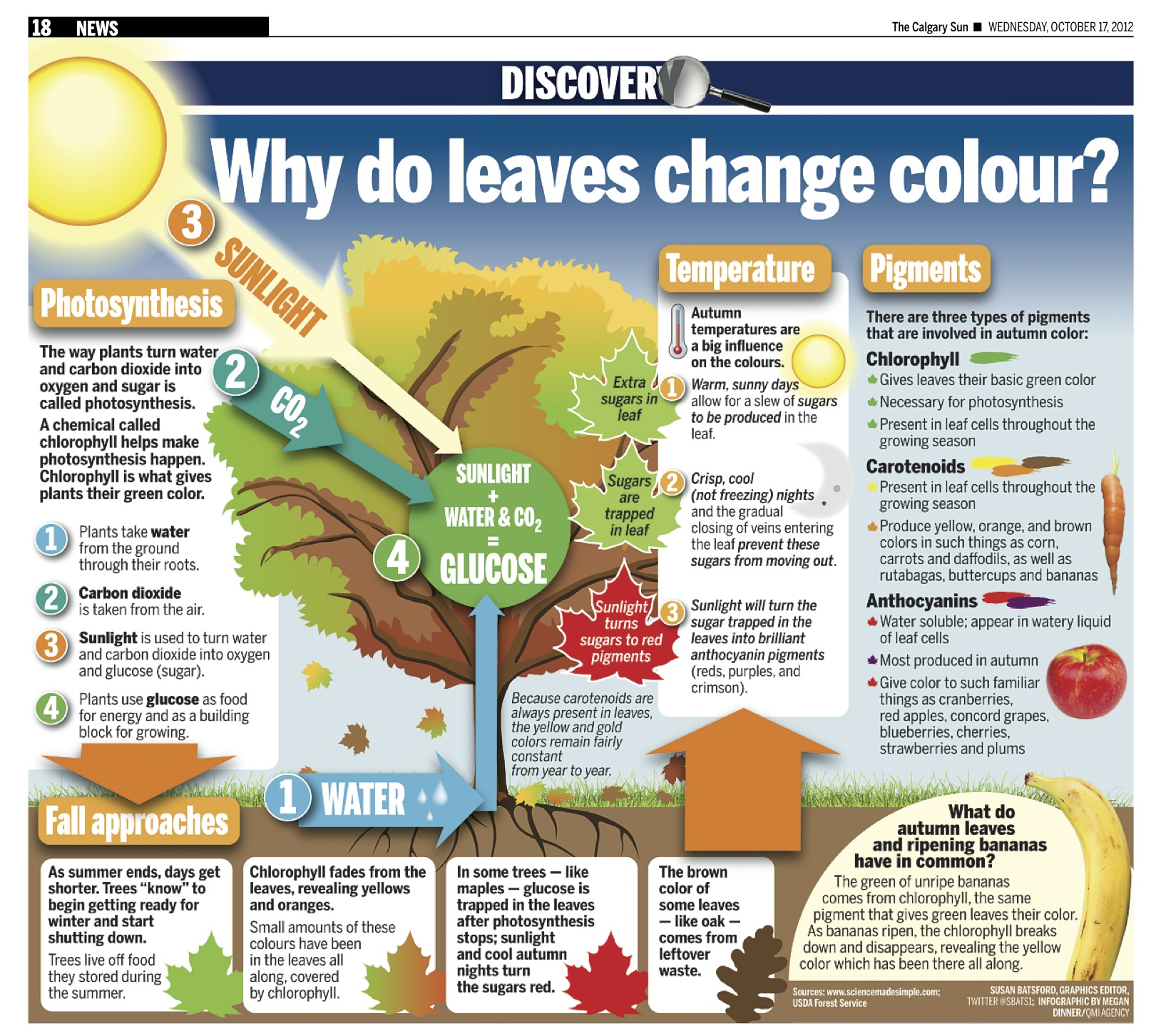Why Do Leaves Change Color And Fall