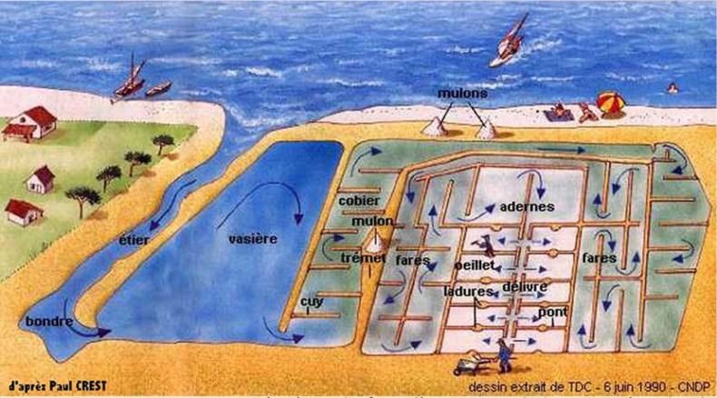 Schéma de fonctionnement des marais salants