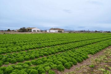 Agricultura de Murcia. Destino: el mundo