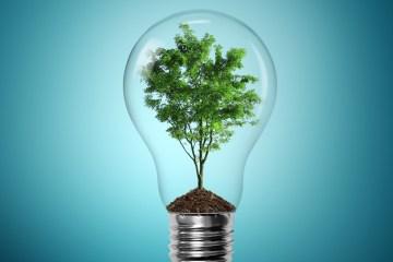 Seis maneras de hacer que su negocio global sea más ecológico