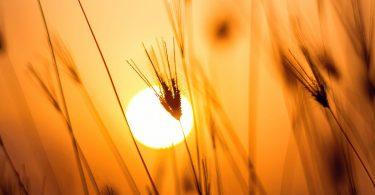 Photo by Darwis Alwan from Pexels