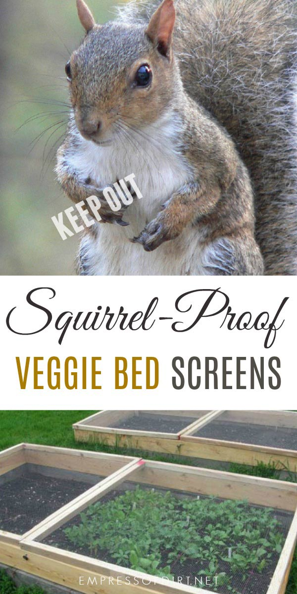 Squirrel Proof Screen Door