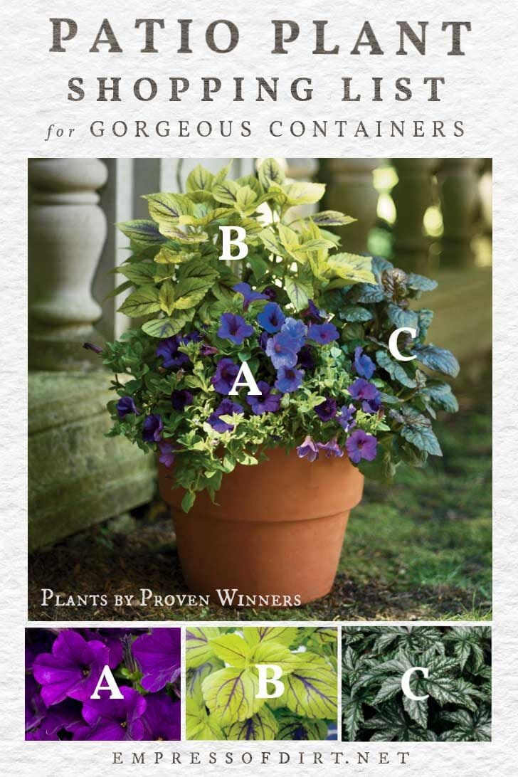 plant ideas for beautiful patio