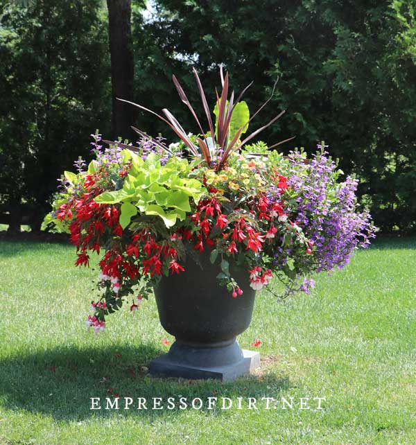 8 Bold And Colorful Flower Pot Ideas Care Tips Empress Of Dirt