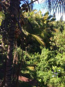 jungle views