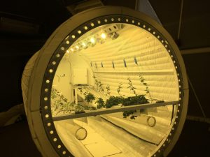 lunar greenhouse