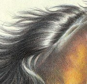 draw realistic hair in colored