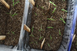 seedlings-from-above